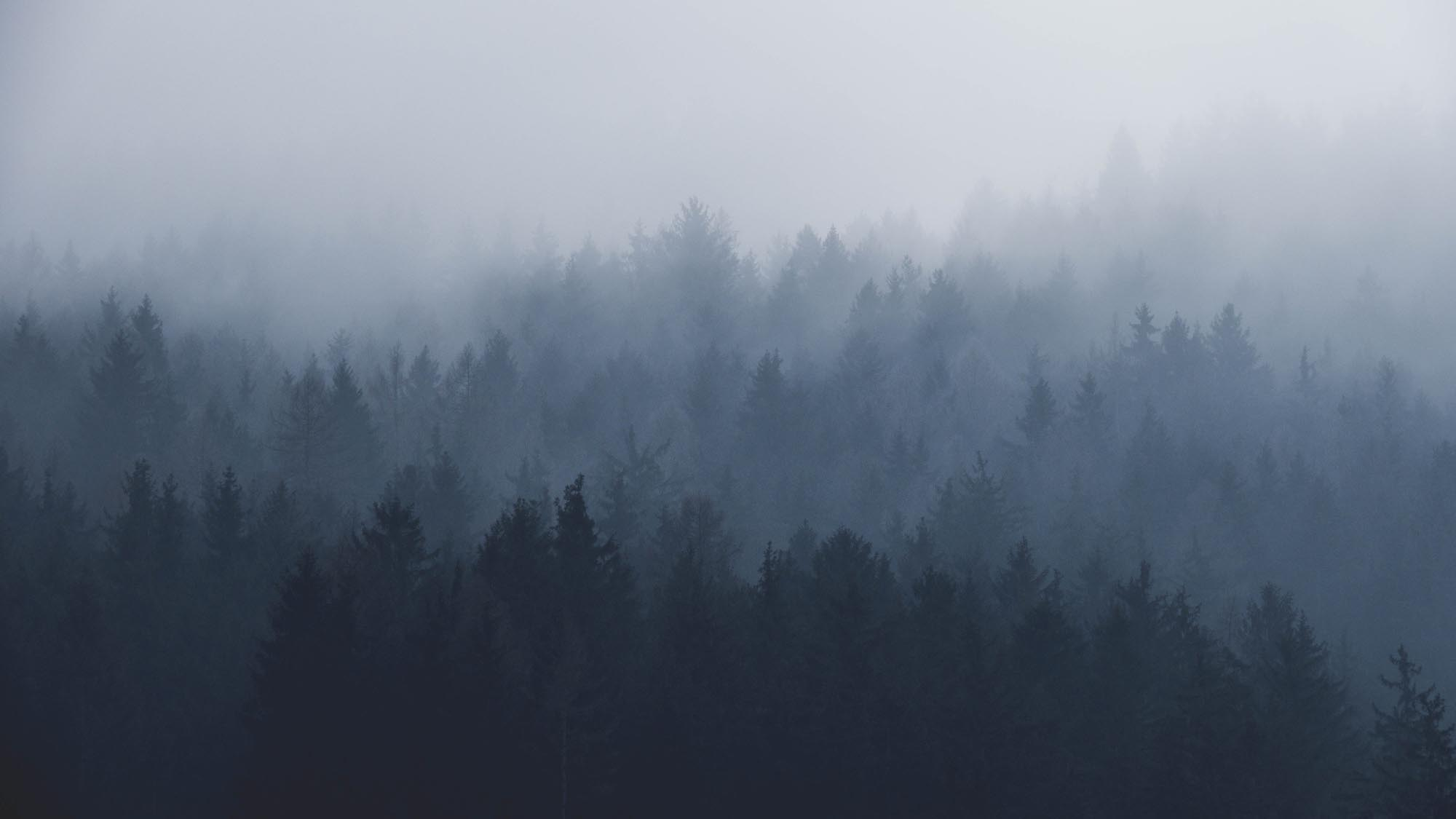 Forest in a fog.